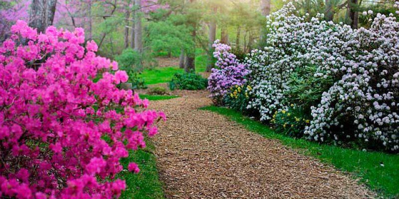 Тот  единственный сад…